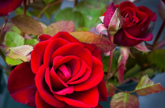 De Kleur Rood : De betekenis van kleuren